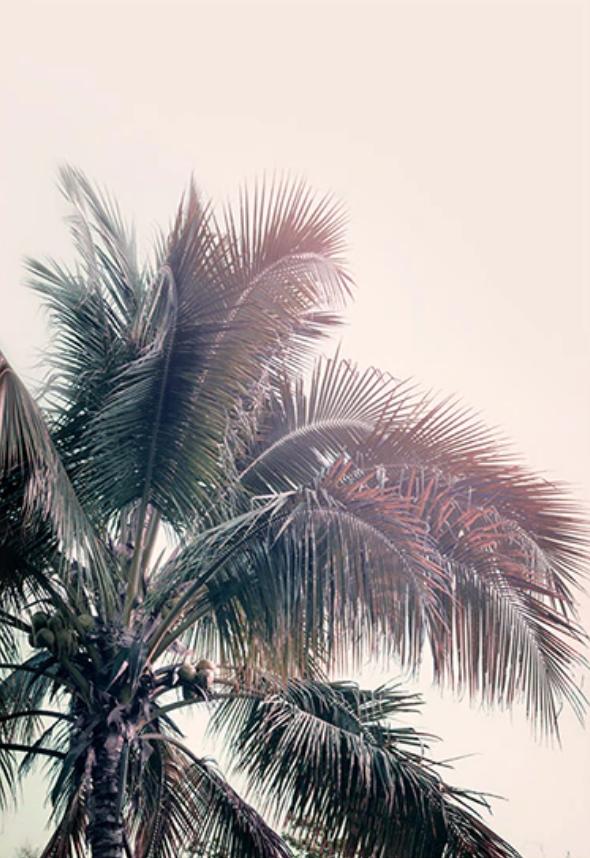 palmtree_lookbook
